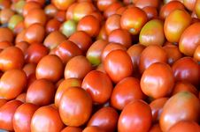 Fresh Tomato  Fruit On Traditional Market Stock Images