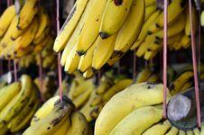 Free Banana Fruit On Display Royalty Free Stock Photos - 28290598