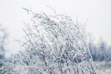 Free Frozen Field Stock Photo - 28294000