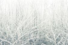 Free Frozen Bushes Stock Photography - 28294052