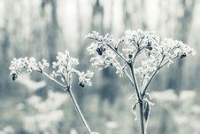 Free Frozen Bush Stock Images - 28294184