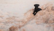 Free Puppy On A Beach Stock Photography - 28295222