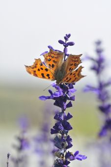 Free Butterfly Royalty Free Stock Images - 28295649