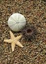 Free Starfish And Sea-urchin Stock Photography - 2838042
