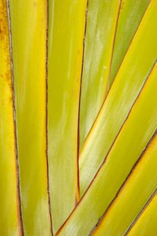 Free Palm Leaf Royalty Free Stock Images - 2831329