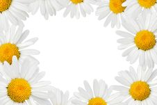 Free Camomiles Frame Royalty Free Stock Image - 2831586