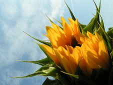 Free Sunflower II Royalty Free Stock Images - 2832479