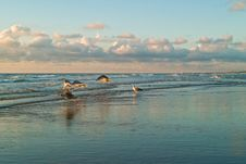 Free Sea And The Seagulls Stock Photography - 2833552