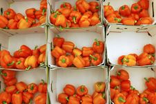 Free The Orange Peppers Stock Images - 2834854