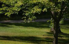 Free Big Single Tree Stock Photography - 2835252