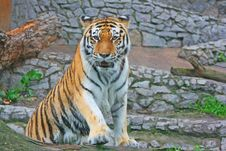 Free Tiger Stock Photography - 2837592