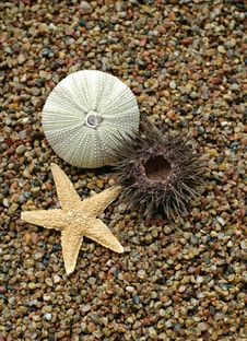 Free Starfish And Sea-urchin Stock Photography - 2838042