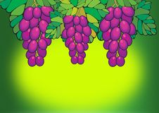 Free Purple Grapes Royalty Free Stock Images - 2838929
