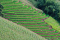 Free Terraced Rice Fields In Northern Thailand Royalty Free Stock Images - 28301479