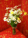 Free Beautiful Bouquet With White Camomiles Stock Photo - 28304910