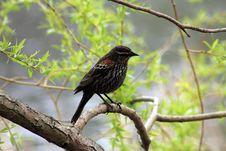 Free The Bird Stock Photography - 28300252