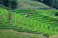 Free Terraced Rice Fields In Northern Thailand Stock Photos - 28301513