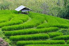 Free Terraced Rice Fields In Northern Thailand Royalty Free Stock Image - 28301576