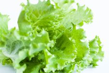Free Green Salad On A White Background - Lollo Rosso Stock Photography - 28303882