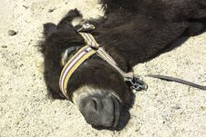 Free Donkeys Sleep Stock Image - 28304581