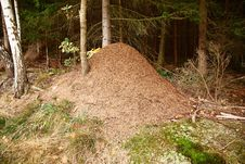 Free Anthill Stock Photography - 28305052