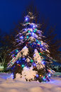 Free Snowy Tree Lit For Christmas Royalty Free Stock Photo - 28327195