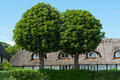 Free Oak Trees In Front Of A House Royalty Free Stock Photo - 28327285