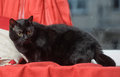 Free Black Cat On A Red Royalty Free Stock Images - 28327719