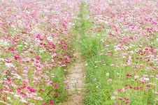 Free Beautiful Flowers In The Meadow Stock Photography - 28321222