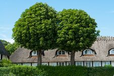 Oak Trees In Front Of A House Royalty Free Stock Photo