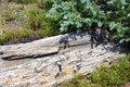 Free Mountain High Altitude Log Stock Photos - 28330753