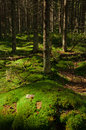 Free Green Forest Stock Photos - 28330973