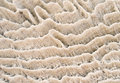 Free Natural Coral Texture Stock Photography - 28337702