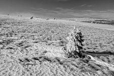 Free Black & White Winter Landscape Stock Photo - 28330860