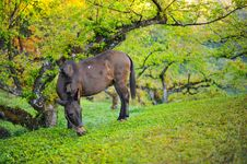 Free A Mule Stock Images - 28331674