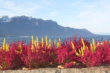 Free View Of Montreux Royalty Free Stock Photography - 28332437