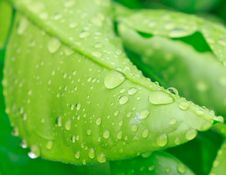Free Water On The Leaves Stock Image - 28334271