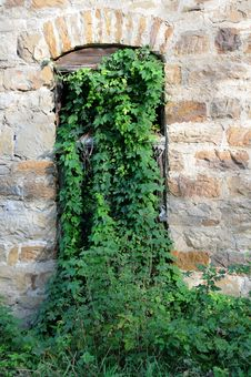 Abandoned Mill Overgrown Window Stock Image
