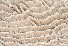 Natural Coral Texture Stock Photography