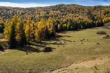Free Scenery Of Grassland Of Xinjiang, China Stock Photos - 28338543