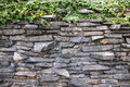 Free The Climbing Fig On The Stone Wall Stock Photo - 28342490