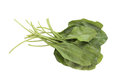 Free Fresh Bunch Of Organic Spinach  On White Stock Images - 28342524