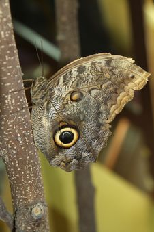 Free Butterfly On A Branch Royalty Free Stock Images - 28341849
