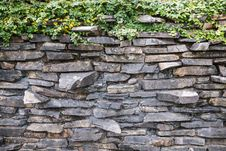 The Climbing Fig On The Stone Wall Stock Photo