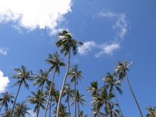 Free Tropical Sunny Day Royalty Free Stock Image - 28347766