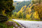 Free Road With Trees Stock Image - 28341981