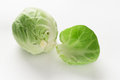 Free Fresh Brussel Sprout Royalty Free Stock Photo - 28358815