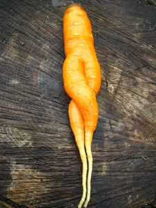 Free Unusual Carrot Lying On A Stub Stock Photography - 28359862