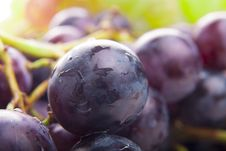 Free Wet Black Grapes Royalty Free Stock Photos - 28361508