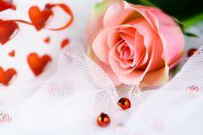 Free Romantic Single Perfect Pink Rose Royalty Free Stock Photos - 28362768